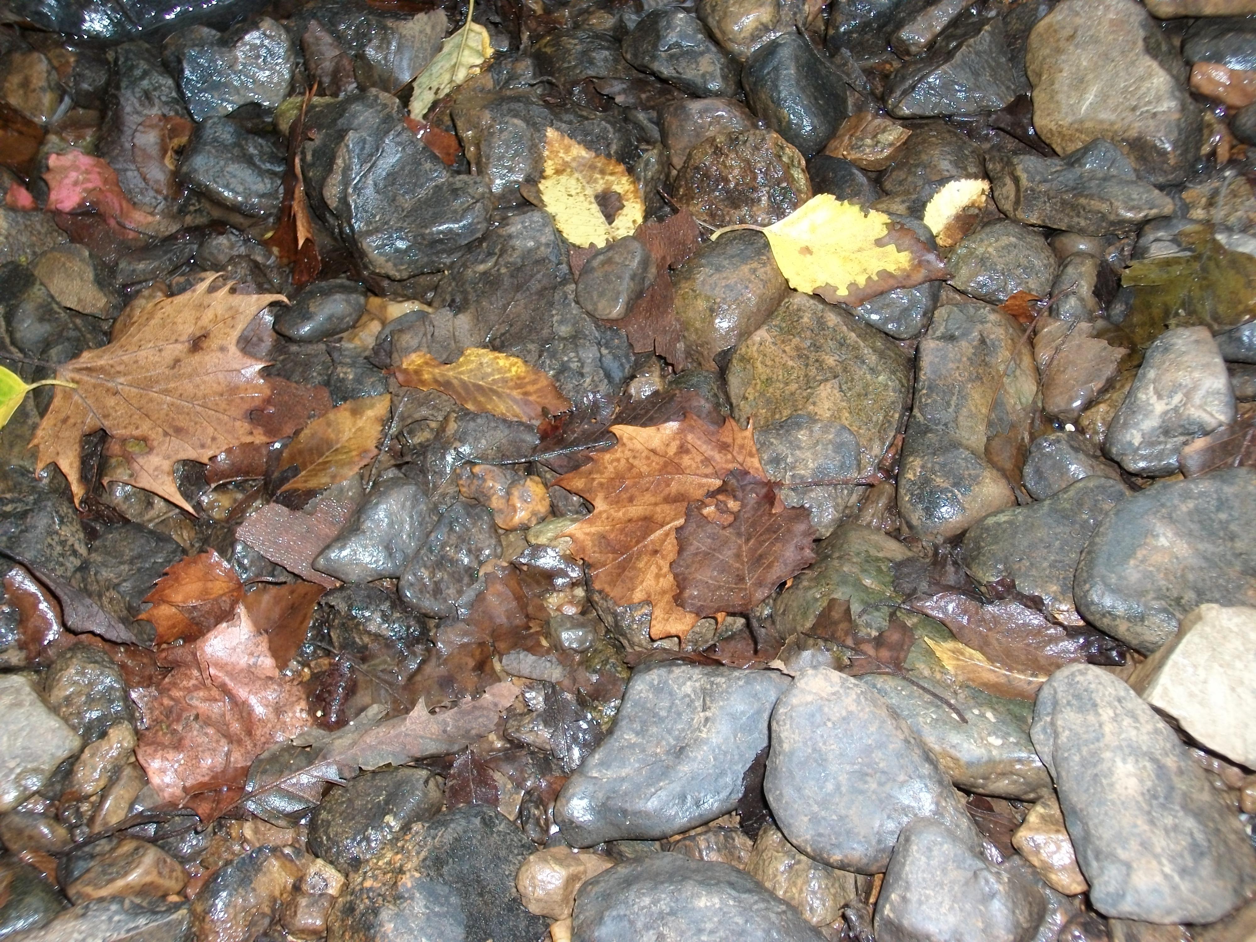 Eno River Stones.